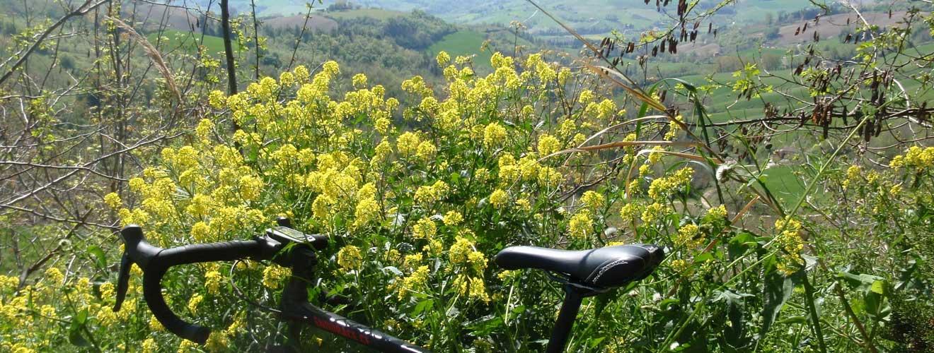 fietsen in Le Marche
